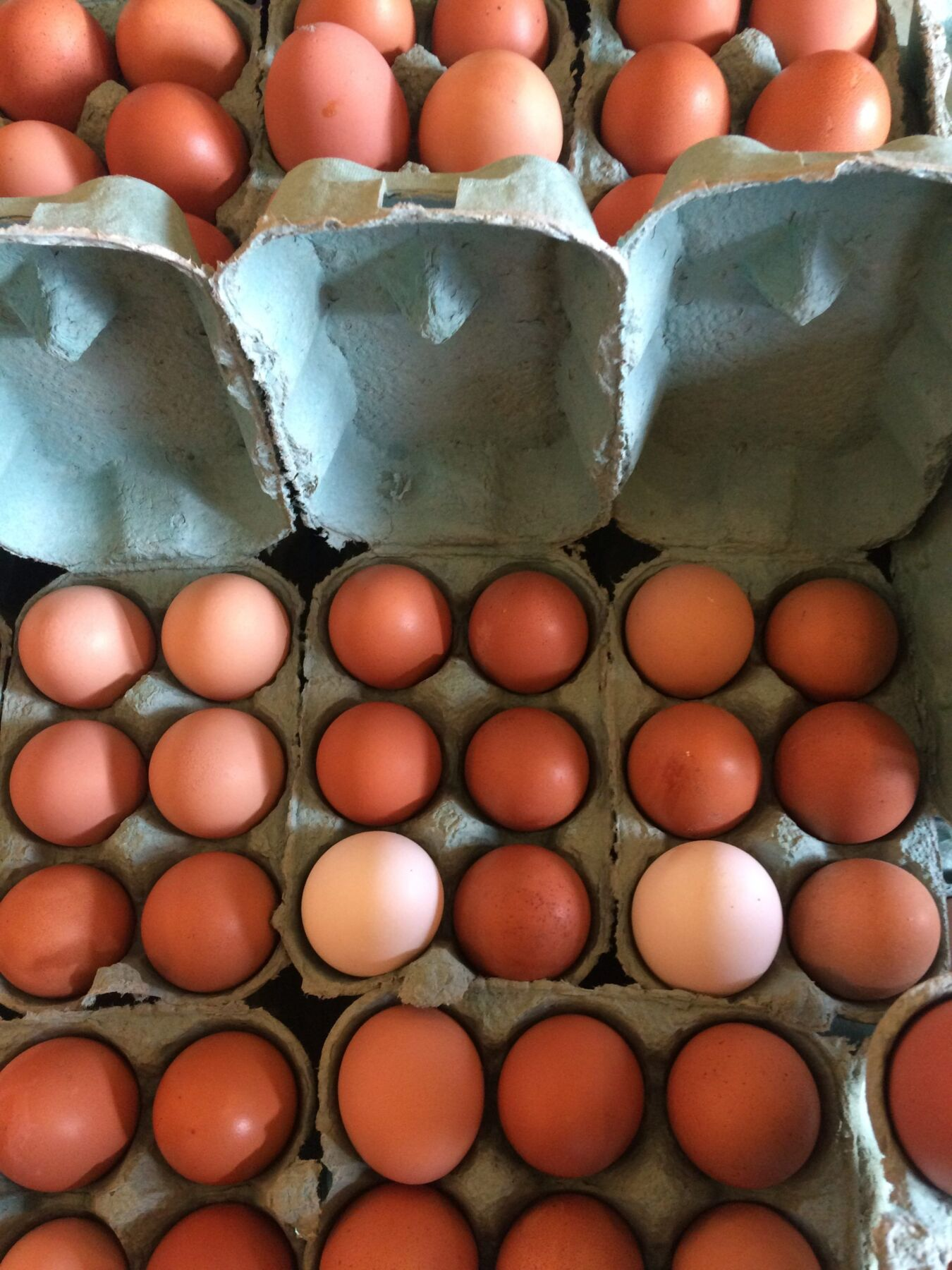 Green Egg Boxes